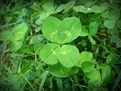 Why is God like a Clover Leaf?