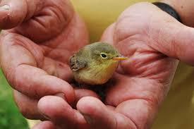 gentle bird