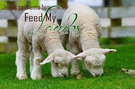 memories lambs