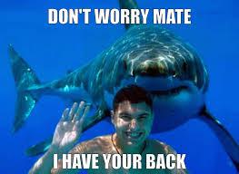 shark back