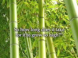 chinese-bamboo